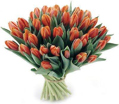 Bukiet 35 Tulipanów Pomarańczowych