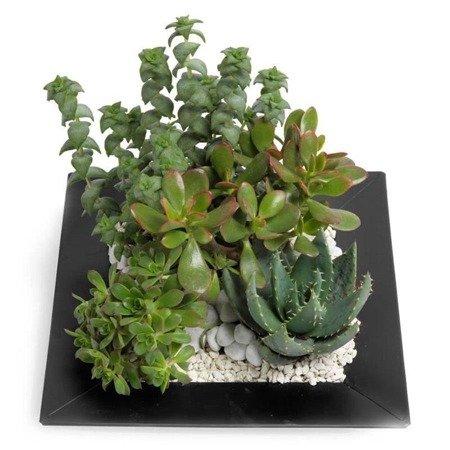 """Bukiet  """"Succulent"""""""